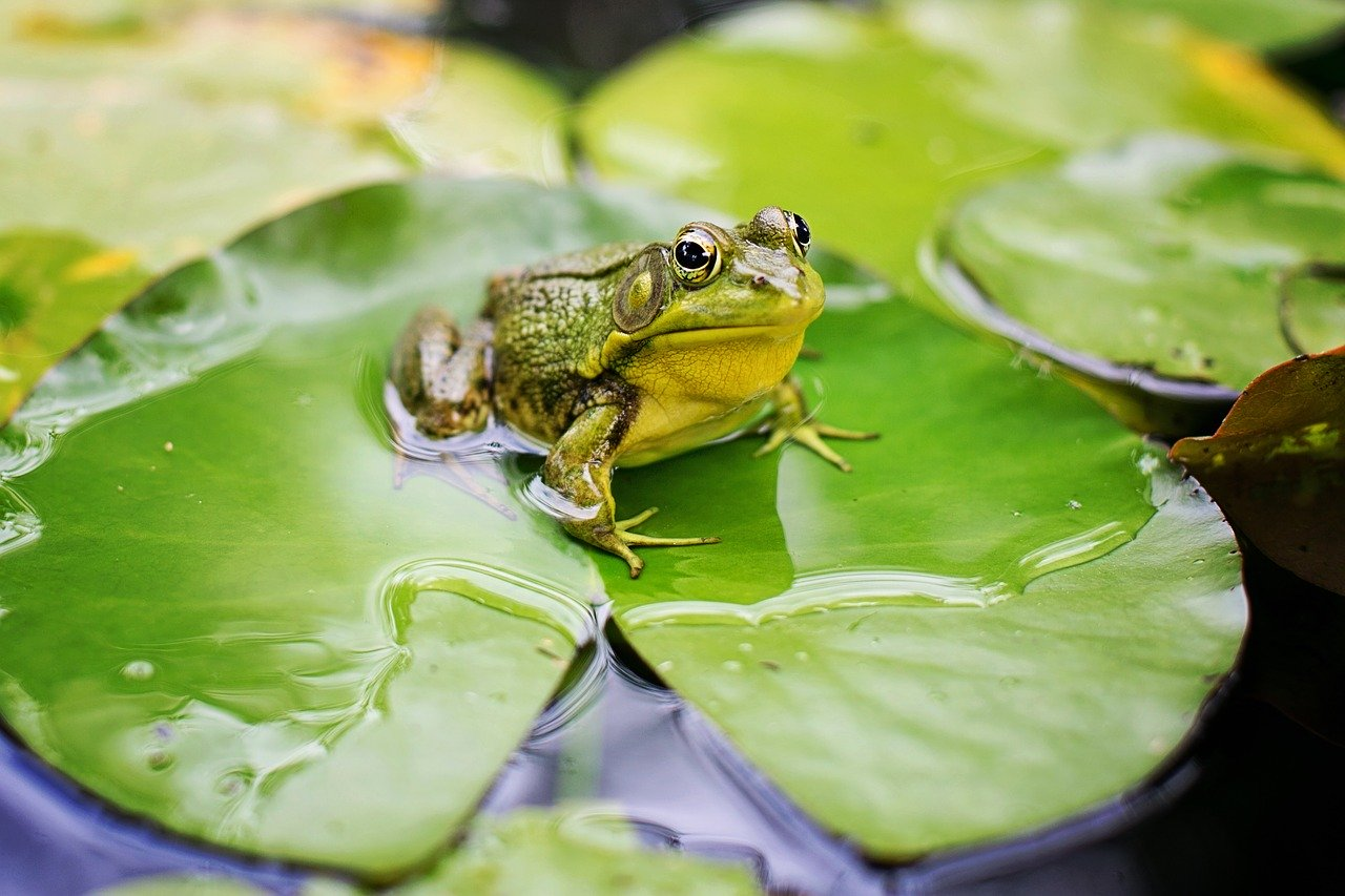 Eat Your Frog Day